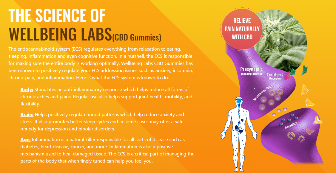 Well Being Labs CBD Gummies1